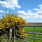Gorse Bush by apple88