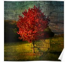 Automn Red Poster