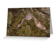 Barred Owl Descent II Greeting Card