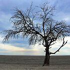 Lone tree at low tide by myraj