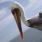 Pelican with 'tude by Joe Randeen