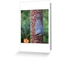 Nuthatch on the Feeder Greeting Card