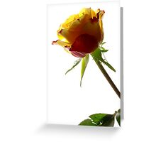 Rose - Impressions # 1 Greeting Card