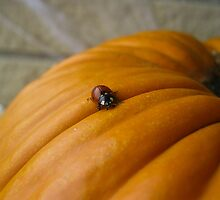 A Ladybugs travels by Heather Paakkonen