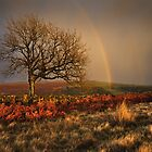 Dramatic Danby - North Yorkshire by Ian Snowdon /     www.downtoearthimages.co.uk
