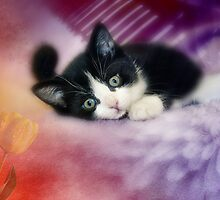Day Dreaming by Elaine  Manley