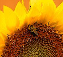 Gathering Nectar by kkphoto1