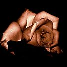 STRONG ROSE by Scott  d'Almeida