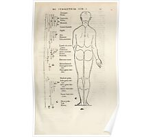Famous Painter Parts Human Body Symmetry Four Books Geomety 1557 Albrecht Durer 0031 Male Back Poster