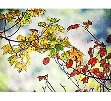 Is that fall I see? Photographic Print