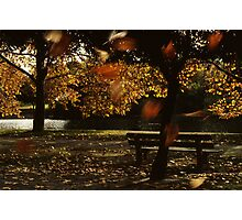 Autumn Concerto Photographic Print