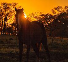 Horse at Sunrise by photograham