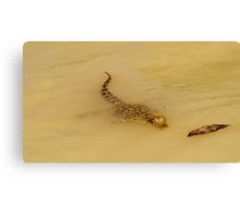 Baby Croc - Adelaide River NT Canvas Print