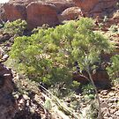 Looking Down into Garden of Eden. Kings Canyon. by Rita Blom
