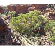 Looking Down into Garden of Eden. Kings Canyon. Photographic Print
