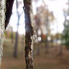 Peek through to the beauty by takemeawaycn