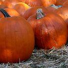 Signs of Autumn by Sandy Woolard