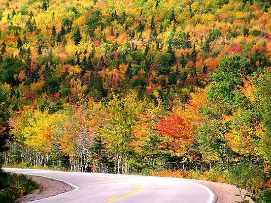 Glorious Autumn by Jann Ashworth