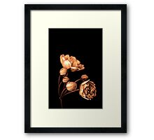 """Sepia Rose"" Framed Print"