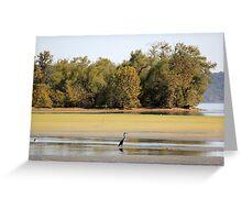 Heron at Brush Creek Greeting Card