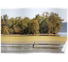 Heron at Brush Creek Poster
