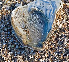 Seashell with Bubbles by Philip Bateman