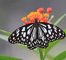 Rice Paper Butterly on Beautiful Flowers! by Rose Landry