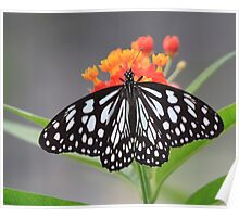 Rice Paper Butterly on Beautiful Flowers! Poster
