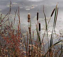Lily Pond Reflection by bunnij