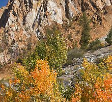 Bishop CA North Fork Fall by photosbyflood