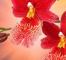Orchid - 7 Sticker