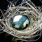 Stone in the nest by James  Kerr