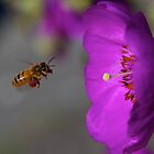 Buzzing bee by Lainey Brown