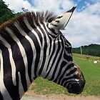 Zebra Profile by Karen Checca