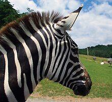 Zebra Profile by Karen Checca