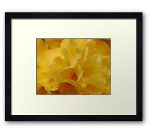 Double Begonia Framed Print