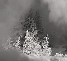 The winter dream by algill