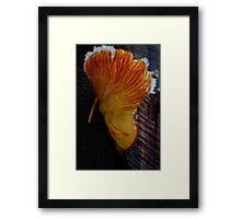 Frozen Fungus Framed Print
