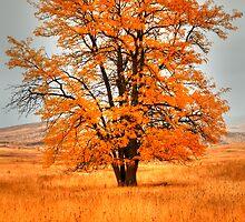Orange Burst by IdahoJim