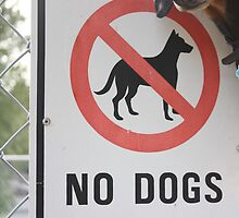 No dogs allowed by Oceanna Solloway
