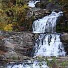 Autumn at Kent Falls by CMCetra