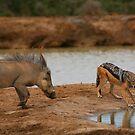 Warthog Versus Jackal by naturalnomad