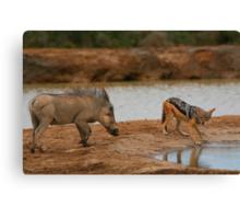 Warthog Versus Jackal Canvas Print