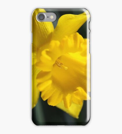 Radiant Yellow Daffodil  iPhone Case/Skin