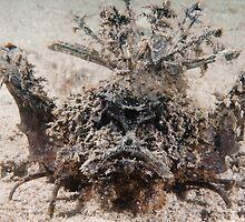 Spiny Devilfish, Bootless Bay, Papua New Guinea by Erik Schlogl