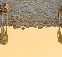 On Golden Pond - Etosha NP Namibia Africa by Beth  Wode
