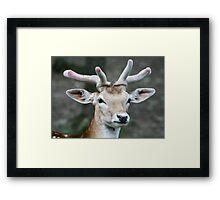 Deer close up Framed Print