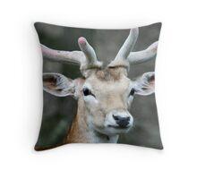 Deer close up Throw Pillow