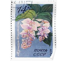Tropical and subtropical plants Soviet Union stamp series 1971 CPA 4084 stamp Medinilla magnifica cancelled USSR Poster
