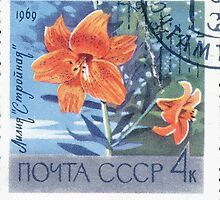 Flowers of The Soviet Union 1969 CPA 3752 stamp Lily Slender cancelled USSR by wetdryvac
